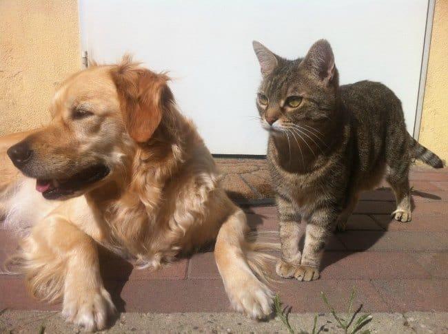 pcs with pets dog